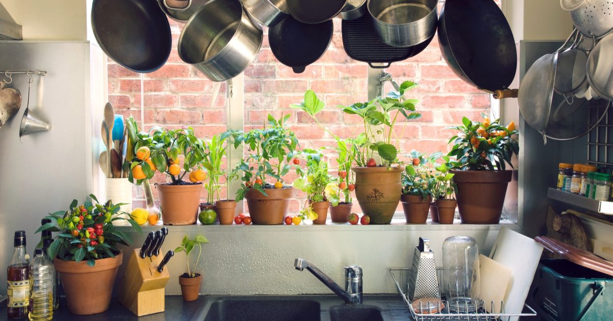 Fruit in pots in the kitchen