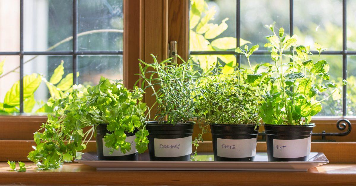 Herbs as Kitchen Decoration