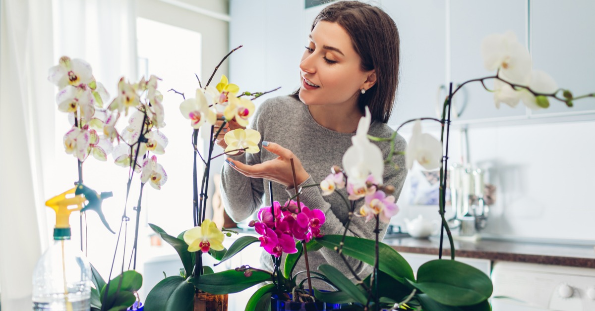 Orchid is the Most Delicate Decoration Plant